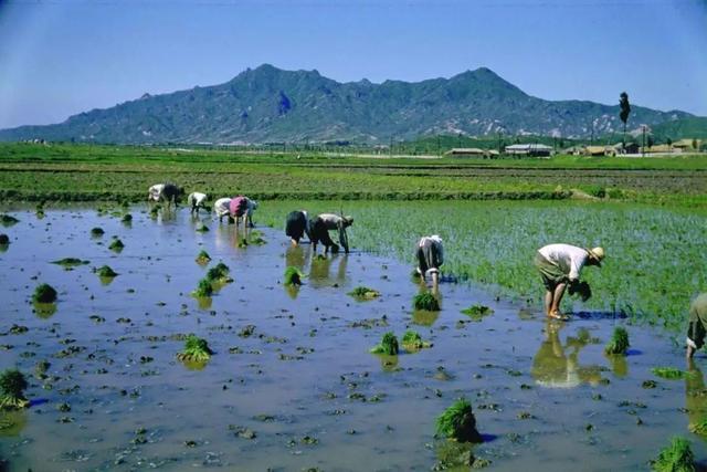 """""""中国农业新闻网""""农业领域的一些颠覆性技术正在被淘汰和颠覆。"""